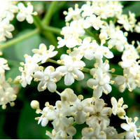 Essential Oil 3% JASMINE BULK 200ml