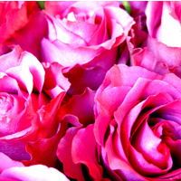 Essential Oil 3% ROSE BULK 200ml