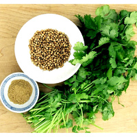 Essential Oil CORIANDER BULK 200ml