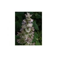 Essential Oil CLARY SAGE BULK 200ml