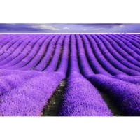 Essential Oil LAVENDER FRENCH 12ml